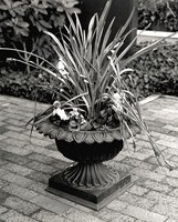 Mediterranean Urn